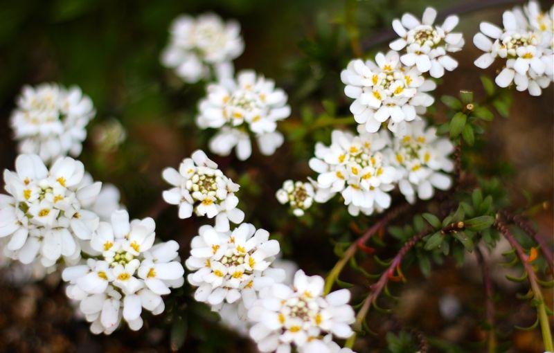 春の白い花の写真5