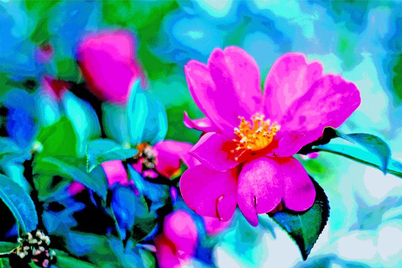 山茶花のフォトアート画像