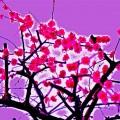 梅の花のフォトアート
