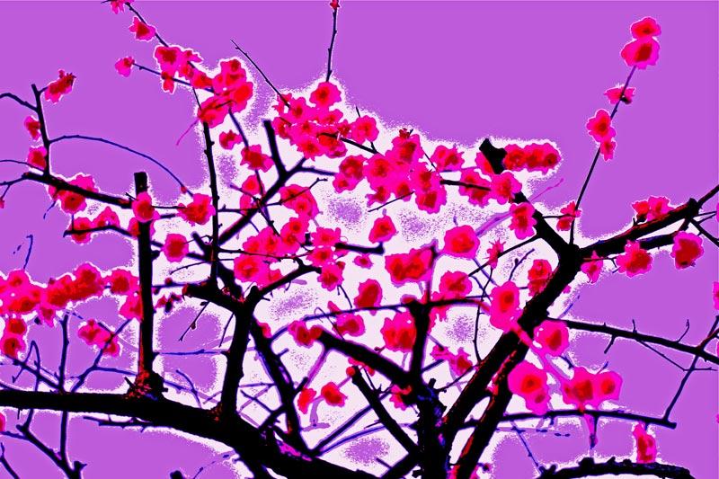 梅の花のフォトアート1