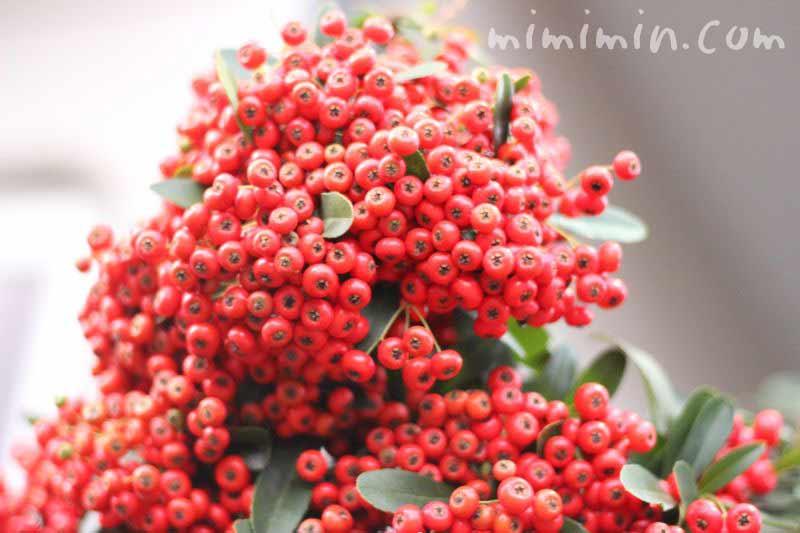 ピラカンサ(赤い実)の画像