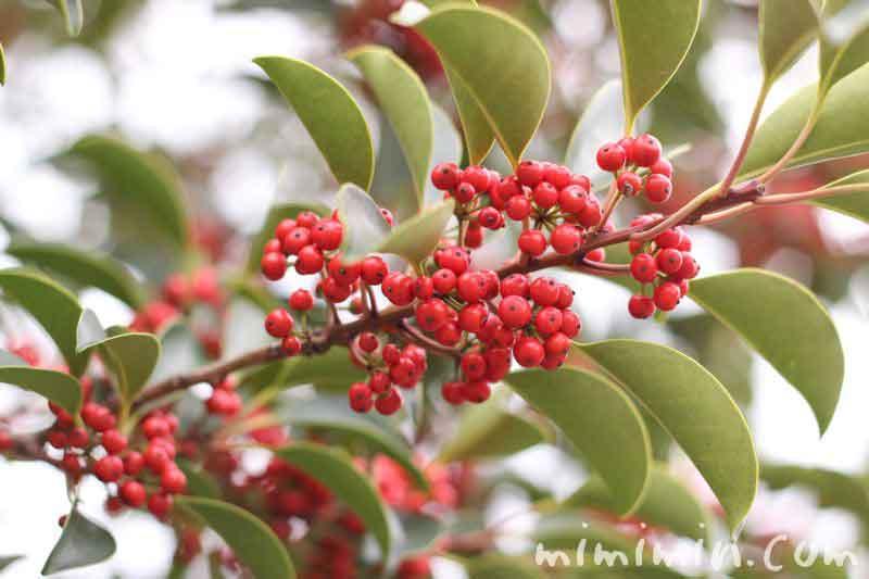 冬の赤い実の写真
