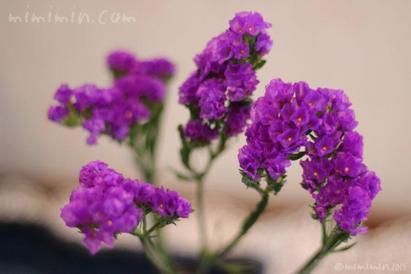 紫のスターチスの写真