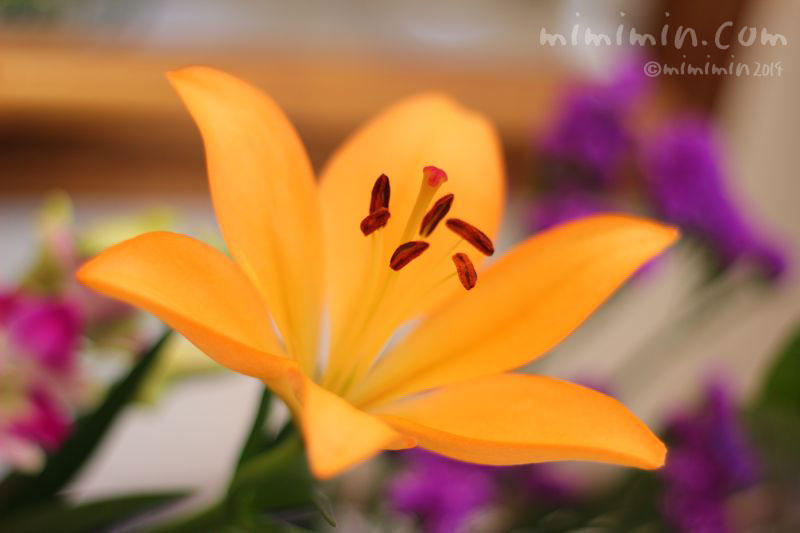ユリの写真(オレンジ色)3