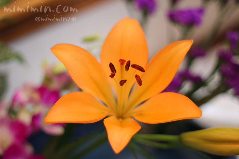 ユリの写真(オレンジ色)2