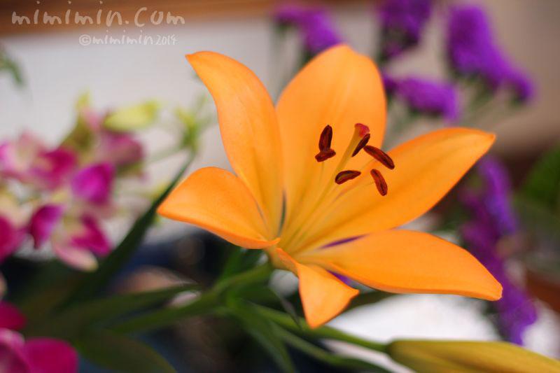 ユリの写真(オレンジ色)