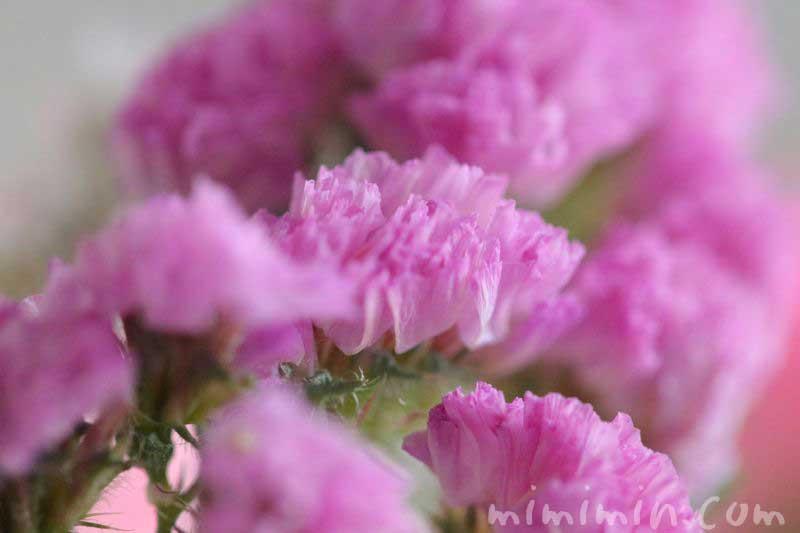 ピンクのスターチスの花の画像