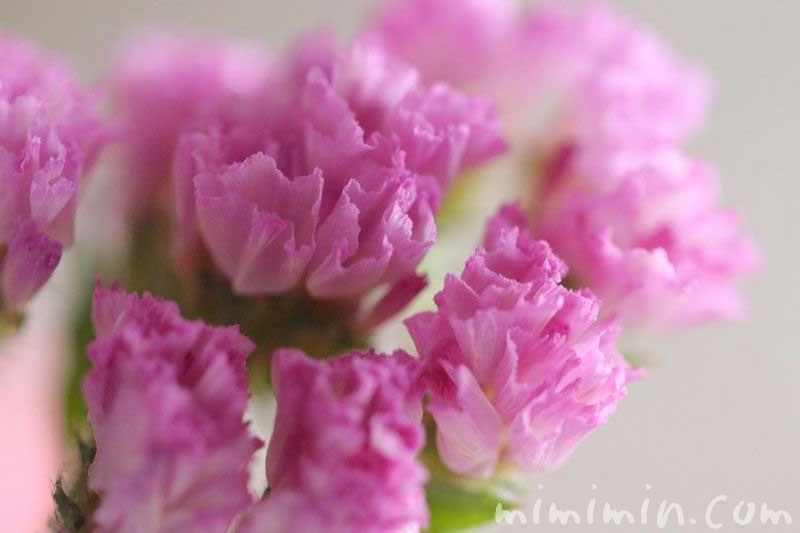 スターチス・ピンクの画像