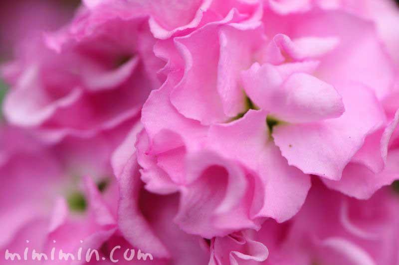 ストック ピンク色の写真