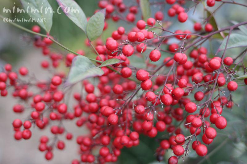 ナンテン(南天)の赤い実