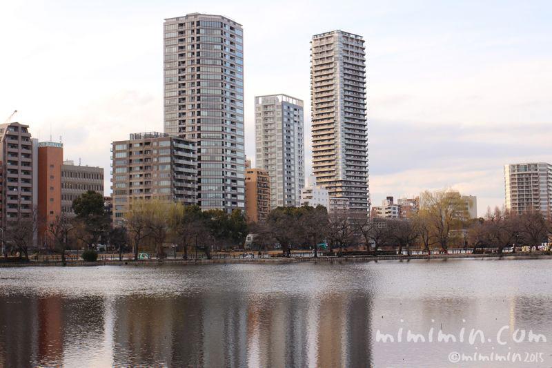 不忍池(上野)の写真
