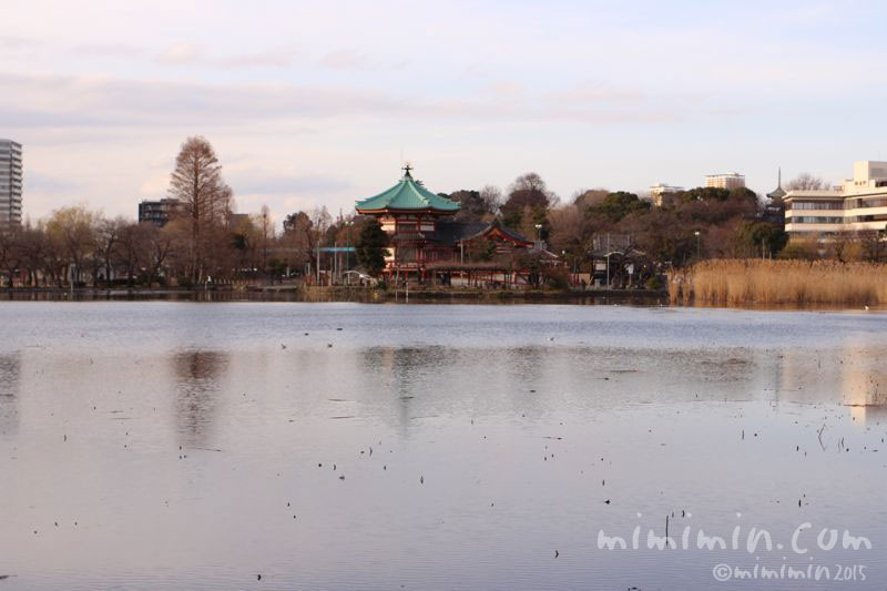 不忍池(上野)の写真2