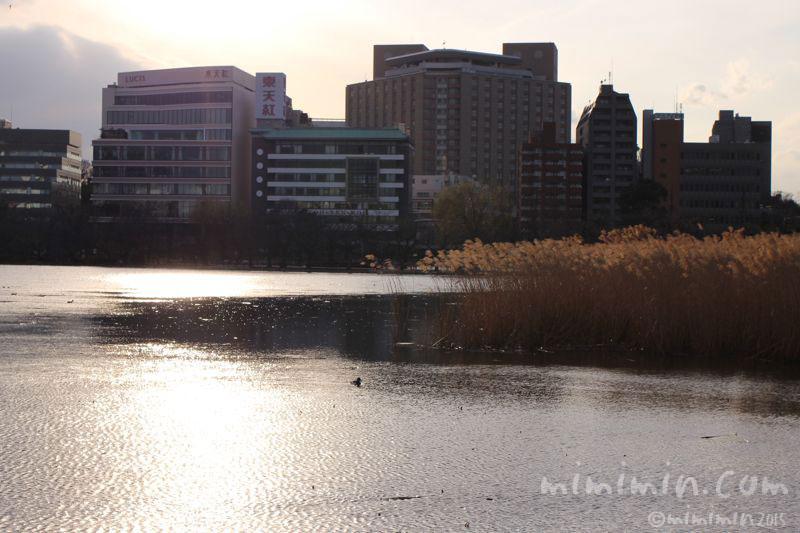 不忍池の写真3