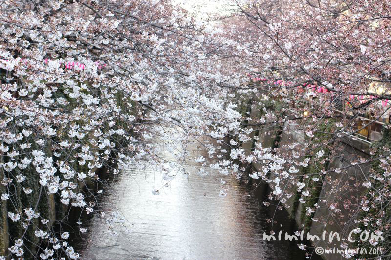 お花見(目黒川の桜)