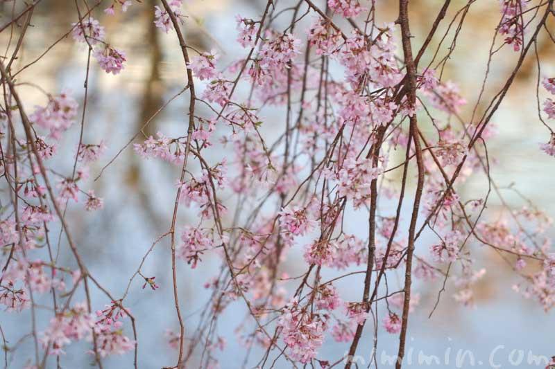 六本木ヒルズ 枝垂れ桜