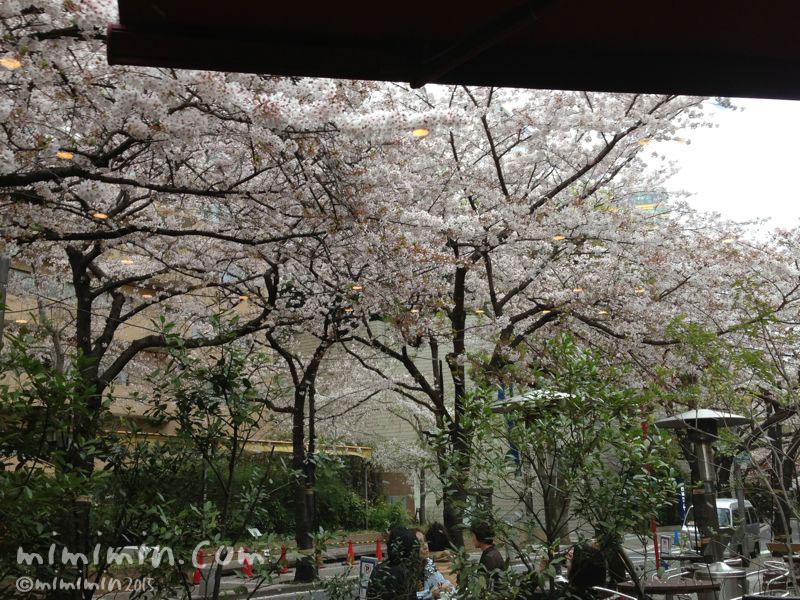 ランディの桜の写真