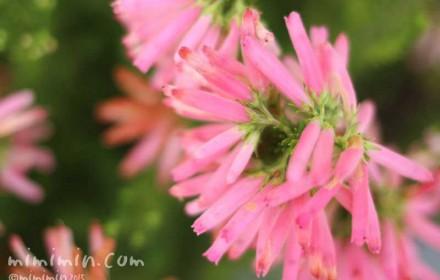 ピンク色のエリアの写真