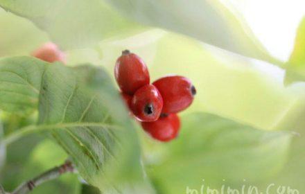 花水木の実の画像