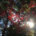南禅寺(10月の紅葉)の画像