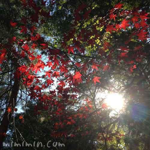 の南禅寺の紅葉の写真