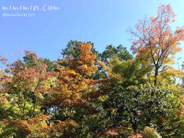 京都南禅寺(秋)の画像