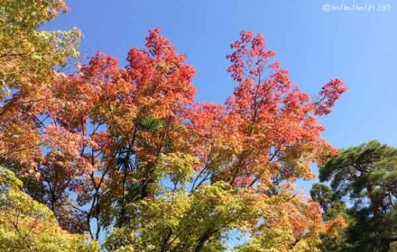 南禅寺(秋の紅葉)の写真