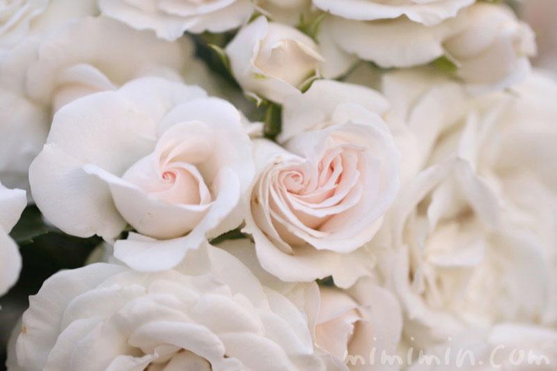 薄いピンク色のバラの写真 花言葉