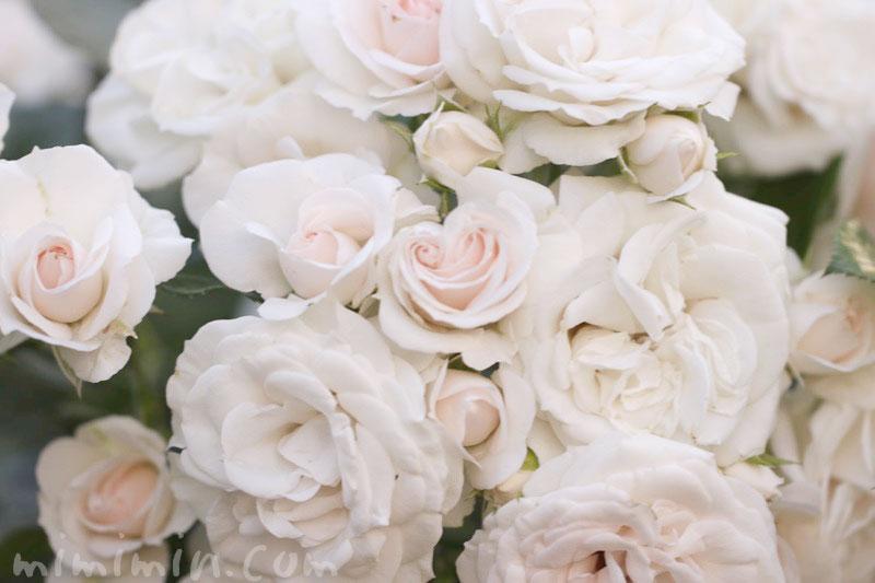 薄いピンク色のバラの写真&花言葉の画像