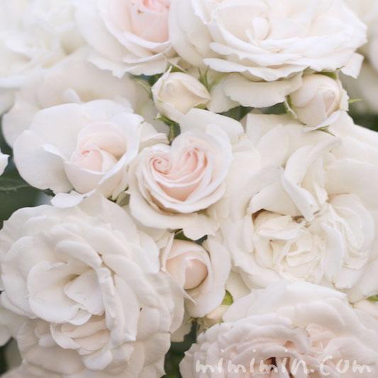 淡いピンク色のバラの花の写真と花言葉の写真