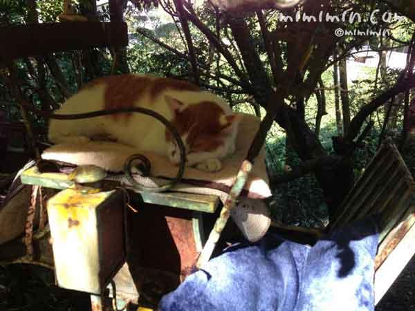 哲学の道の寝ている猫の写真
