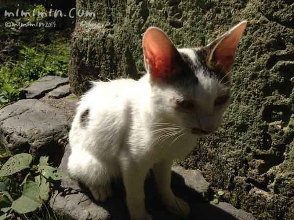 哲学の道のネコの画像