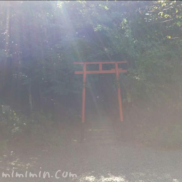京都の大豊神社の写真