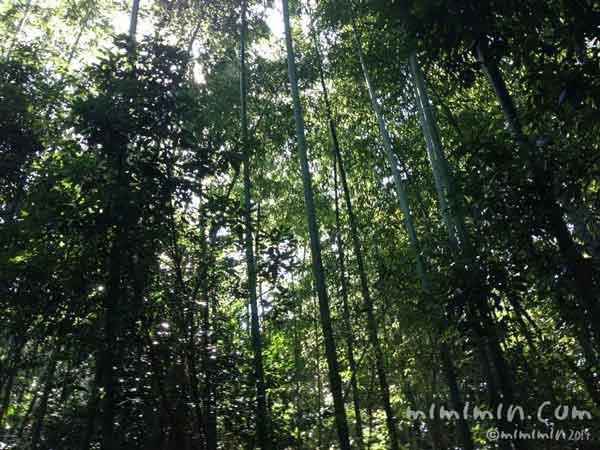 京都の竹林の写真