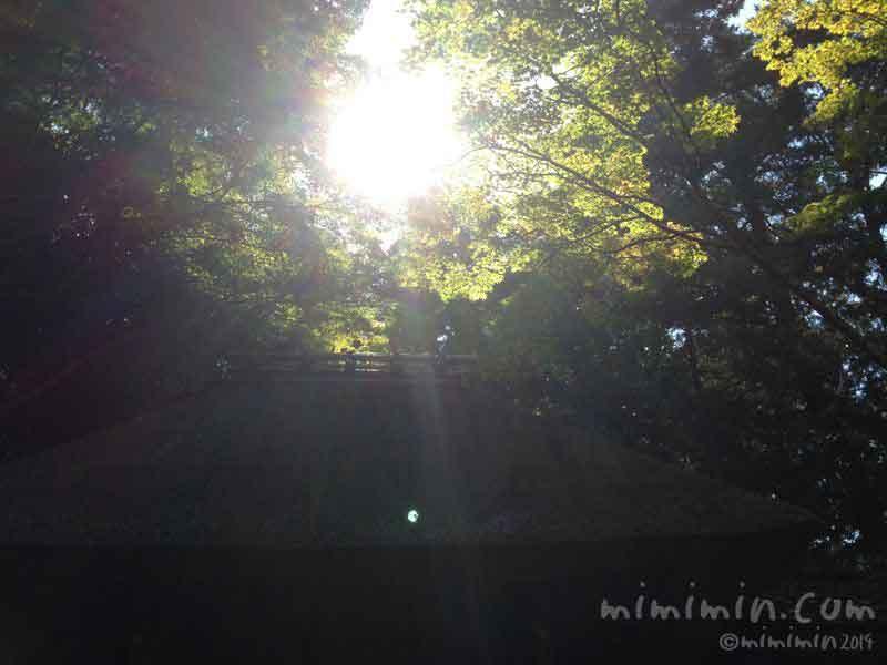 哲学の道の木漏れ日の写真