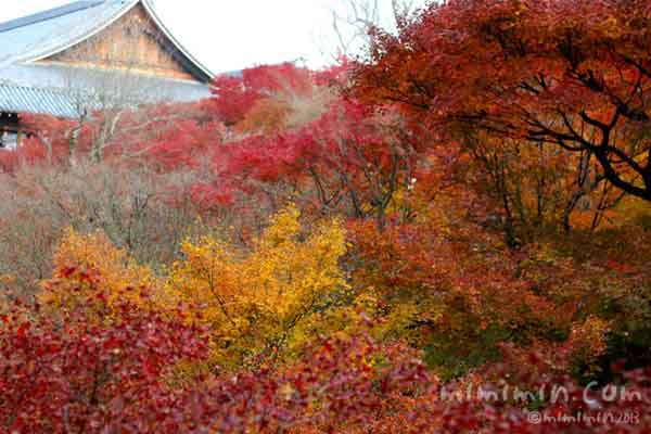 紅葉(東福寺の通天橋・京都)の写真