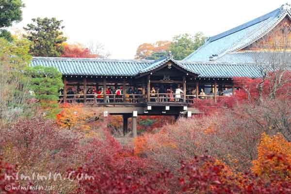 東福寺 通天橋の紅葉の写真