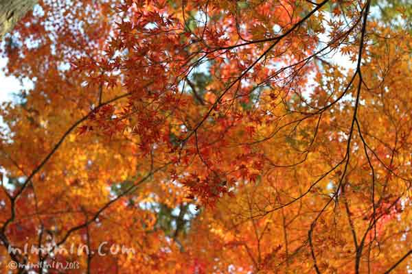 東福寺の紅葉(京都)の写真