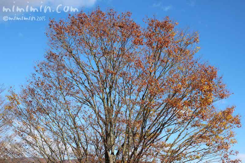 青空と木の写真