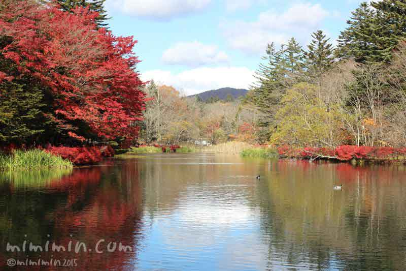 軽井沢 雲場池の紅葉の写真