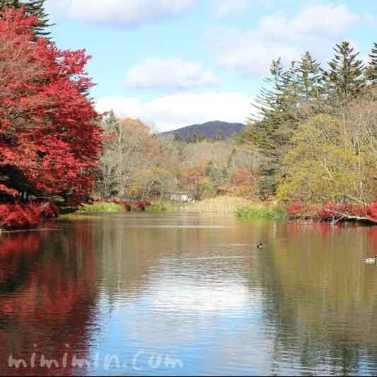 軽井沢 雲場池の画像