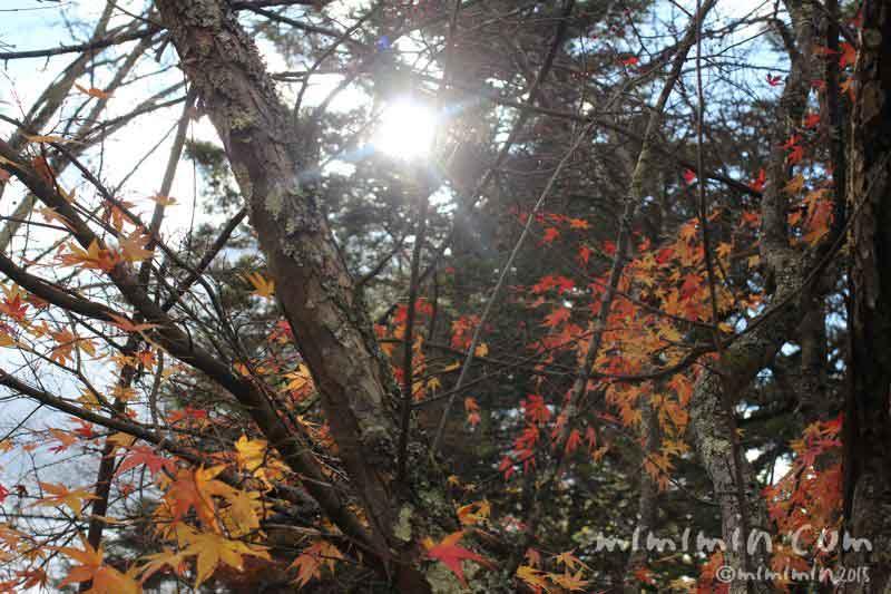 木漏れ日と紅葉の画像