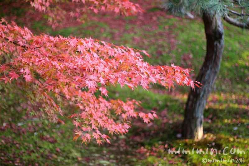 東福寺(紅葉)の写真