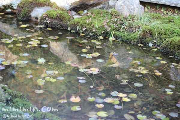 東福寺の蓮池の画像