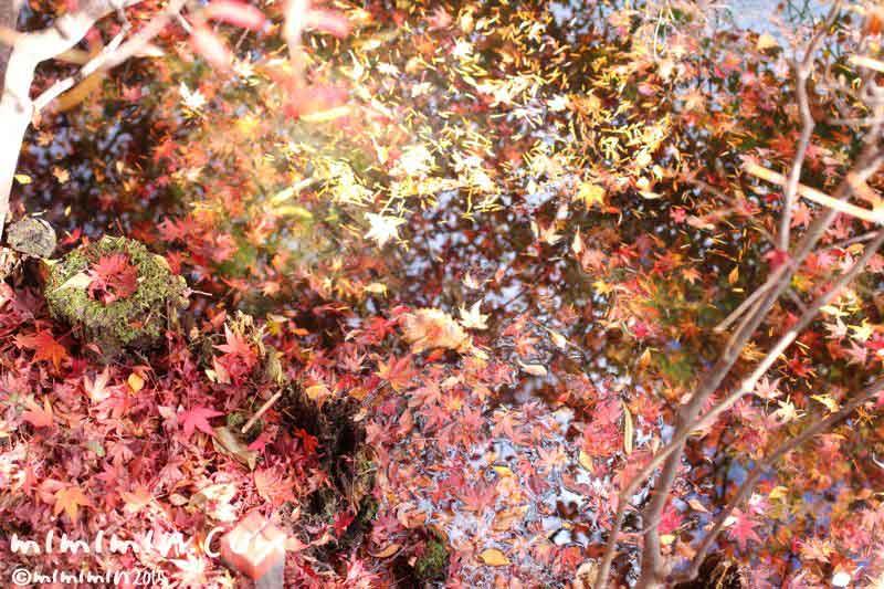 水に浮かぶ落ち葉の画像