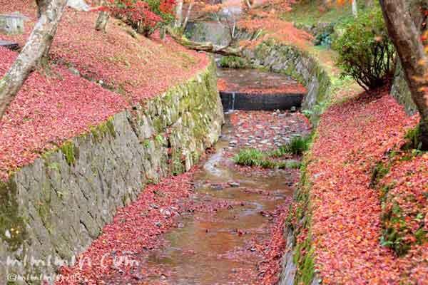 東福寺の川の画像