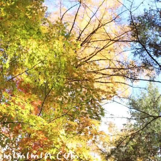 青空と紅葉の写真