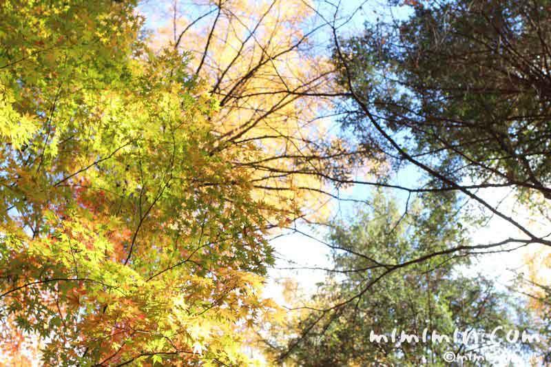 空と紅葉の写真