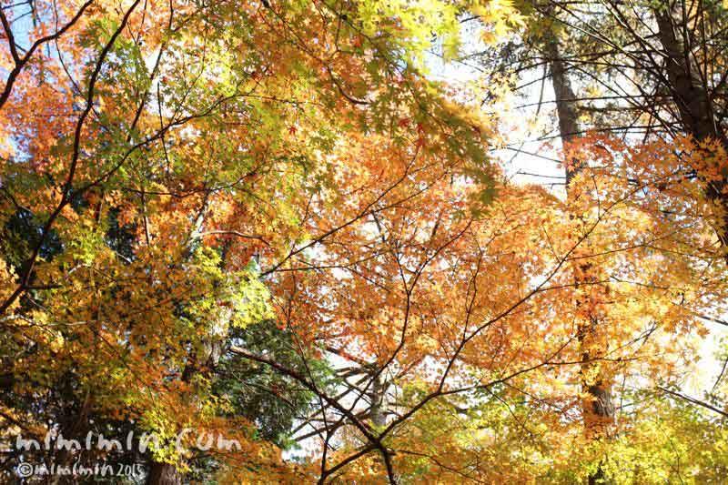 軽井沢の紅葉の写真