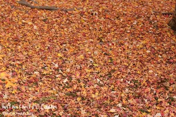 落葉の写真