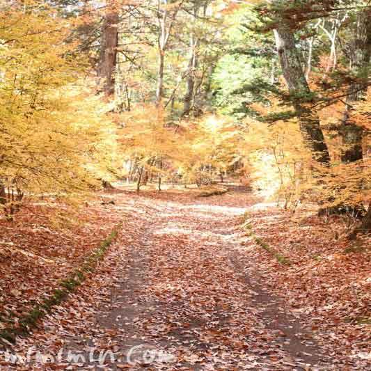 美しい軽井沢の紅葉の写真